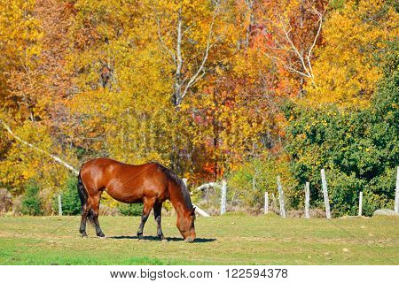 Horse at countryside in Stowe with Autumn mountains and forest