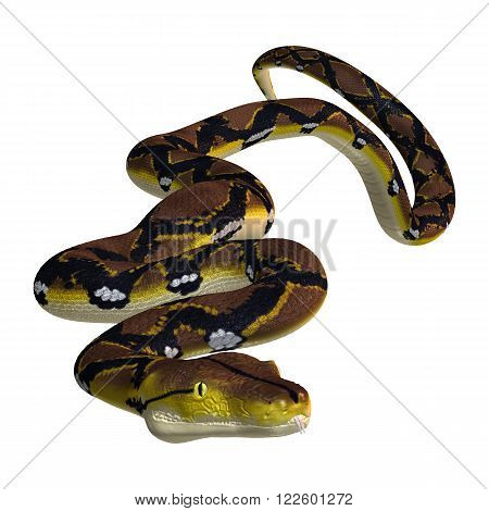 Reticulated python or Python reticulatus, a species of python found in Southeast Asia
