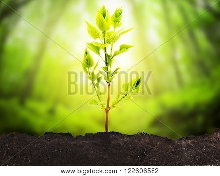 One plant growing on ground
