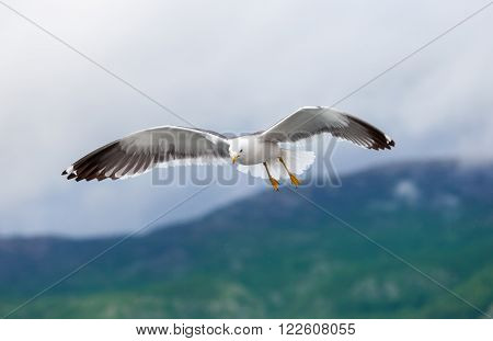 a white seagull before salvage the landing