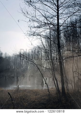 Foggy swamps in autumn. Cool dark lake in primeval forest. Cold melancholic landscape with water vapour. Mystery and mystic wetland with trees. Enigmatic mysterious dark swamp. Eerie situation marsch.