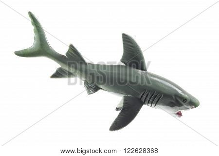 Rubber Shark on an Isolated White Background