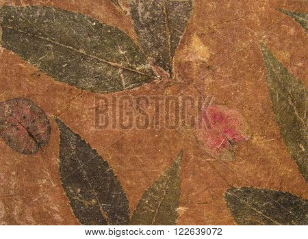Aged Handmade Brown Paper Texture With Leaves Herbarium
