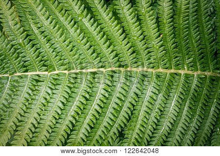 green fern  leaf  with rain drops as background