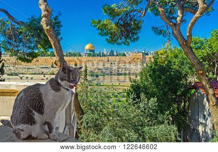 The view through the greenery of garden surrounding the Russian Orthodox Church of Mary Magdalene on the Dome of the Rock and ramparts of Jerusalem Israel.
