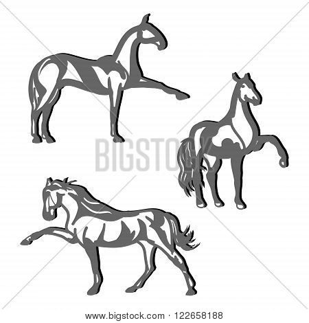 The graphic image of a dressage horse. Horse steps - the pattern of black lines on a white background. Vector illustration of (a set of contours)