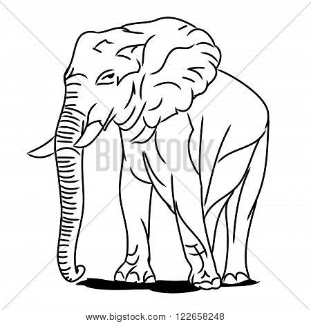 Graphic image of a large elephant. The picture of a elephant on a white background. The contour of the animal. Vector illustration