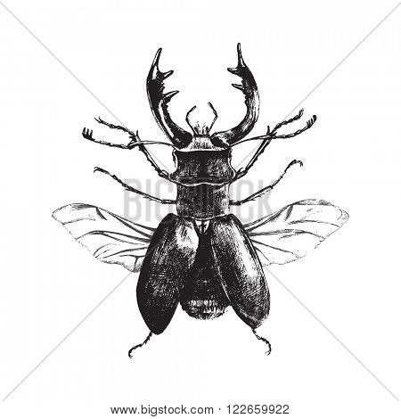 Hand drawn deer beetle on white background
