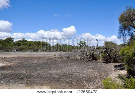 Market garden swamp during a drought with a dried waterbed landscape surrounded by green trees under a blue sky with clouds in Spearwood, Western Australia.