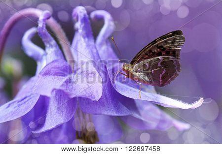 butterfly on a flower bell