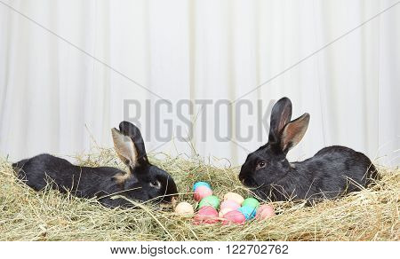 Two rabbits on hay near Easter eggs