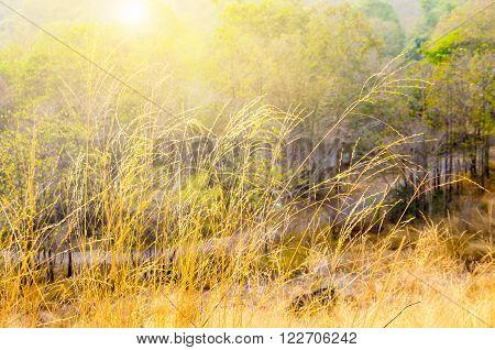 Prairie Grass on mountain with sun light.