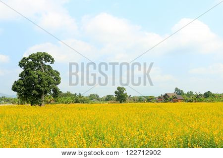 Field and yellow field for land scape style. ** Note: Soft Focus at 100%, best at smaller sizes