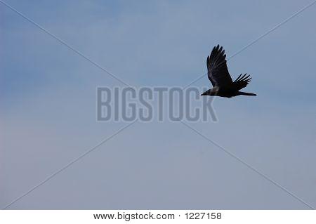 Bird_0607