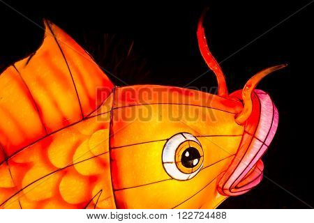 London United Kingdom - February 07 2016: Magical Lantern Festival at Chiswick House And Gardens. Closeup of coy fish lantern