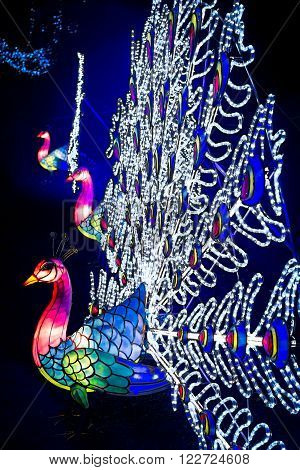 London, United Kingdom - February 07, 2016: Magical Lantern Festival at Chiswick House And Gardens. Installation of peacock lanterns with open colourful tails glowing in the dark
