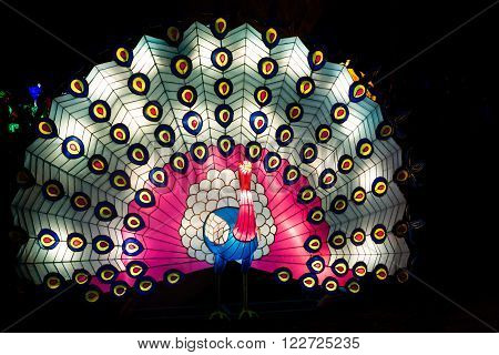 London United Kingdom - February 07 2016: Magical Lantern Festival at Chiswick House And Gardens. Installation of peacock lantern with open colourful tail