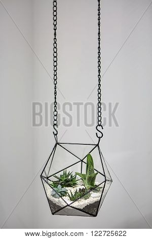Glass vase with metallic frames. The vase is hanging on chains on the gray wall background. Inside vase there are plants, ground and pebbles. Close-up photo.