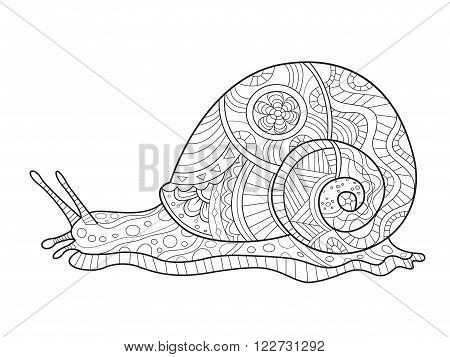 Snail coloring book for adults vector illustration. Anti-stress coloring for adult. Zentangle style. Black and white lines. Lace pattern