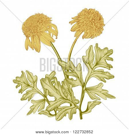 Hand drawing realistic vintage garden  flowers on a yellow background