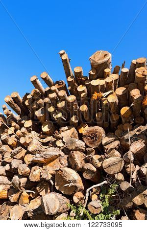 Wooden Logs and Branches on Blue Sky / Trunks of trees cut and stacked with blue clear sky on background