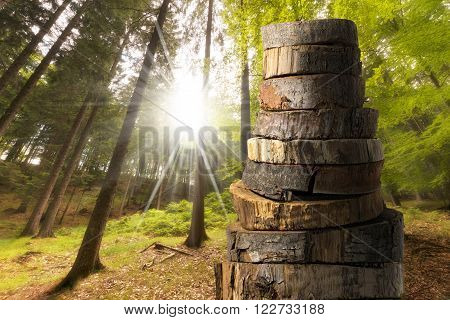 Wooden Logs with Forest on Background / A stack of sections of tree trunks in the foreground, green forest in the background with sun rays