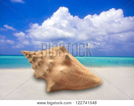 Large conch shell on sandy beach with ocean in background