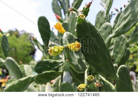 Blossoming cactus in summer., cactus flower with blur background.