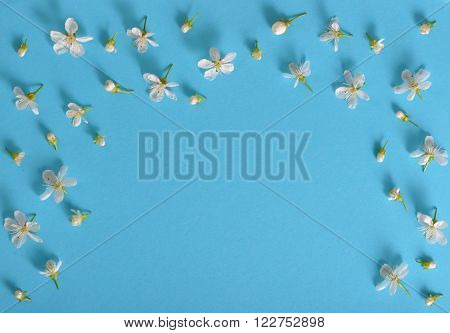 spring cherry flowers frame on blue background