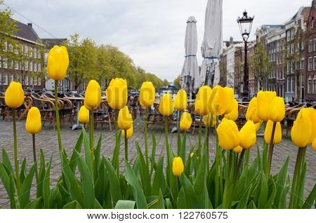 Amsterdam cityscape with yellow tulips on the foreground and outside cafe on the background the Netherlands.