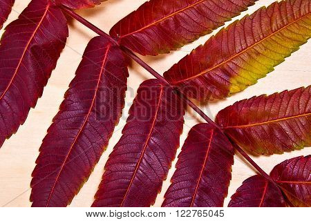 Close Up View Of Autumn Red Leaf On Wooden Background