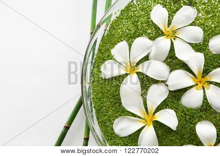 bamboo grove with frangipani with leaf in bowl