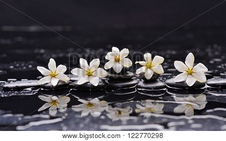 Set of five gardenia on black pebbles