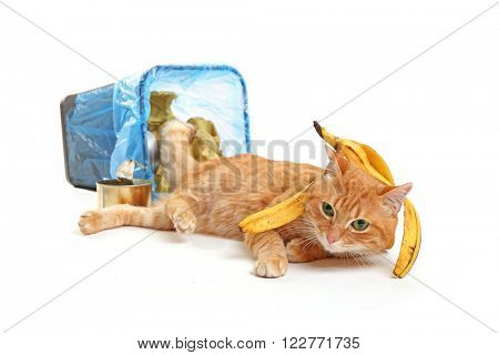 Cute red cat with banana skin near full inverted garbage basket, isolated on white