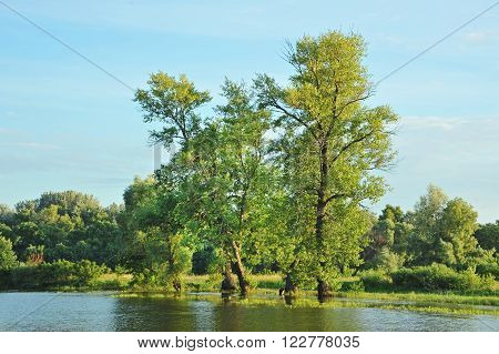 Poplar tree over forest lake Kiev Ukraine