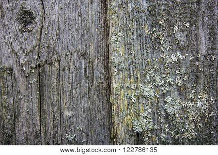 Old grey boards with green moss and lichen