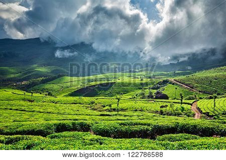 Tea plantations under clouds, Munnar, Kerala, India