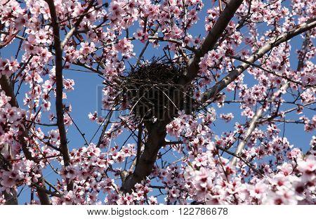 Bird's nest on blooming branch