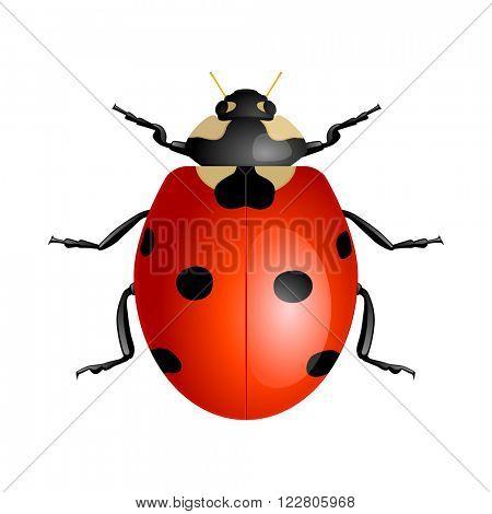 Ladybug isolated on white background. Vector