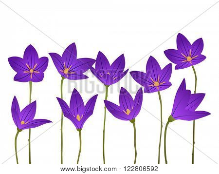 Bellflower isolated on a white background. vector