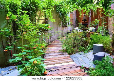 Pathway with plants surrounded by buildings taken in a residential garden