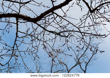 Brunch Of Tree In Dry Season, Background Is Blue Sky.