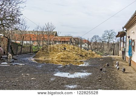 The backyard of the small rural farms and watchdog.