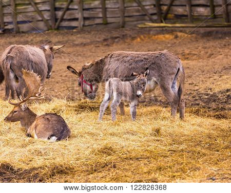 Donkey and fallow-deer group photographed in animal park