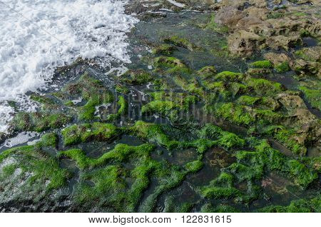 Waves crashing on Algae covered rocks along the coast of the Pacific Ocean