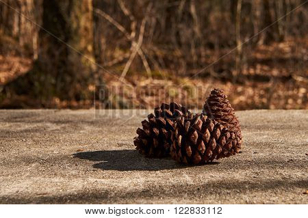 Pinecones arranged purposefully on a concrete table in the woods.