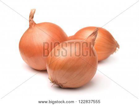 Three onion bulbs isolated on white