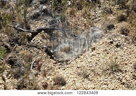 A spider has spun a trap on the ground in the Sonoran Desert of the Southwestern USA