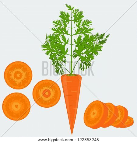 Vegetable organic food fresh and sliced carrot isolated on white background vector illustration. Flat and solid color design.