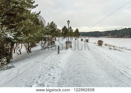 Bench Near Trail